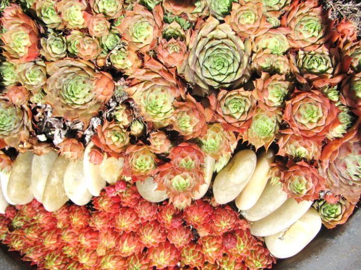 Let s talk succulents potted plant society for Succulents that do well in shade